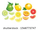 Citrus Whole And Slices. Fresh...