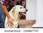Stock photo man with his yellow labrador retriever 156887747