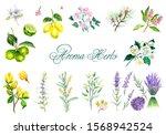 watercolor hand drawn set of... | Shutterstock . vector #1568942524