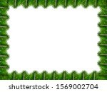 areca palm leaf isolated on... | Shutterstock . vector #1569002704