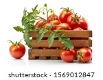 Harvest Tomatoes In Wooden Box...