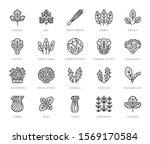 green vegetables flat line... | Shutterstock .eps vector #1569170584