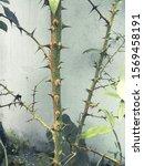 Vegetation Showing Stem With...