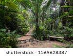 Walking trail in a rain forest...
