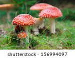 Fly Agaric In A Forest  Closeu...