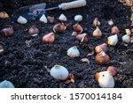 selective focus closeup of... | Shutterstock . vector #1570014184