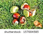 Conkers Autumn From Horse...
