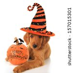 Small photo of Cute Halloween puppy with a pumpkin.