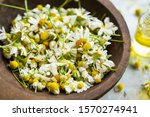 Dried Chamomile Flowers In...