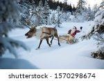 A Reindeer Pulling Santa Claus...