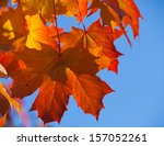 Autumnal Maple Foliage