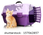 Stock photo cute little red kitten with travel plastic cage isolated on white 157062857