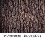 Beautiful Nature Texture   Tree ...