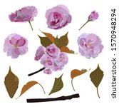 sakura branch and its parts ... | Shutterstock .eps vector #1570948294