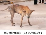 Small photo of Mangy stray dogs on the street, homeless dog