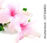 Beautiful Pink Hibiscus Flower...