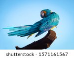 Blue Yellow Macaw Parrot Bird...