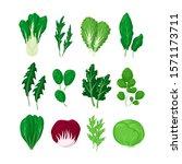 green salad vegetables leaves... | Shutterstock .eps vector #1571173711