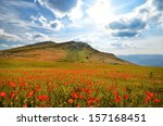 field with blooming poppies in... | Shutterstock . vector #157168451