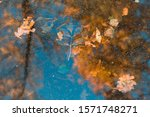 Bright View Of The Autumn Pond...