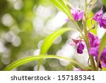blurred background with flowers | Shutterstock . vector #157185341