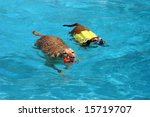 Two Dogs Swimming Together In A ...