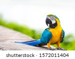 Happy Blue Gold Macaw Parrot...
