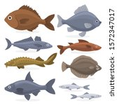 fish set. collection of aquatic ... | Shutterstock . vector #1572347017