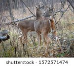 Two Young Bucks Checking Out...