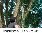 Tree Worker Has Cut A Large...