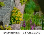 landscape design. flowers and... | Shutterstock . vector #1572676147