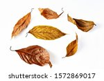 Dry Leaves Isolated On White...