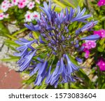 Stately Decorative Deep Blue...