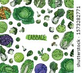 hand drawn sketch style cabbage ... | Shutterstock .eps vector #1573282771