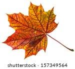 Stock photo autumn leaf 157349564