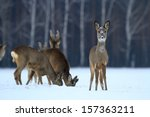 Roe Deer Over The Forest...