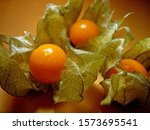 Cape Gooseberry  Goldenberry O...