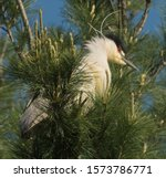 A Heron Is Perched In A Tree...