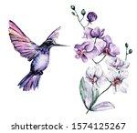 Watercolor Hummingbird ...