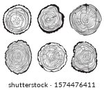 set of tree slice. collection... | Shutterstock .eps vector #1574476411