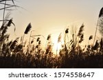 Evening Landscape. The Reed...
