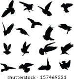 set of 17 silhouettes birds | Shutterstock .eps vector #157469231