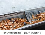 Rain Gutter Clogged With Leaves ...