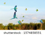colorful parrots flying in the... | Shutterstock . vector #1574858551
