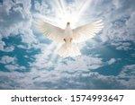White Dove Flying On Sky In...