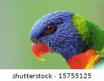 rainbow lorikeet closeup | Shutterstock . vector #15755125