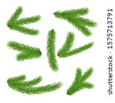 spruce branches isolated on... | Shutterstock .eps vector #1575713791