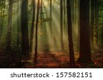 Enchanted Autumn Forest With...
