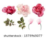 roses. flowers and leaves  can... | Shutterstock . vector #1575965077