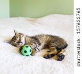 Kitten Sleeping With A Soccer...